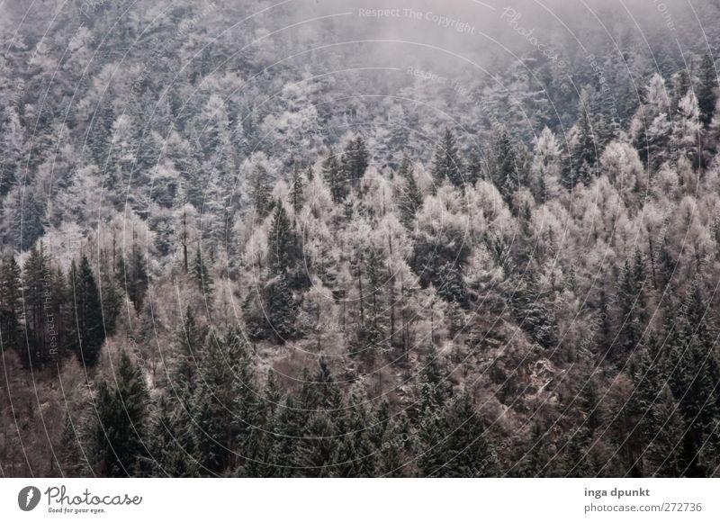 Wintermärchen Umwelt Natur Landschaft Pflanze Klima Wetter schlechtes Wetter Eis Frost Schnee Baum Wald China Juizhaigou Sichuan dunkel Unendlichkeit kalt