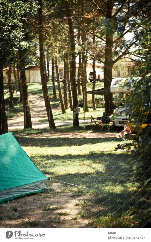 Zeltplatzfeeling Freizeit & Hobby Ferien & Urlaub & Reisen Ausflug Camping Sommer Umwelt Natur Baum Wiese Wald Wohnmobil authentisch einfach grün Erholung
