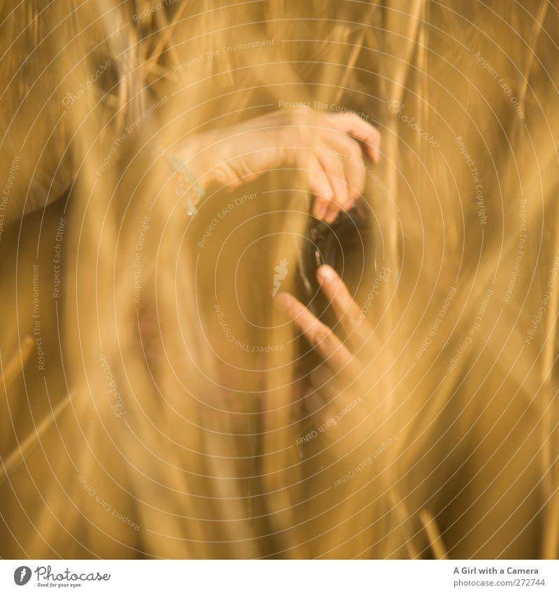 Hiddensee l Paparazzi Mensch Natur Hand Pflanze Sonne Umwelt gelb Wärme Frühling Gras gold beobachten Schönes Wetter stoppen geheimnisvoll Fotografieren
