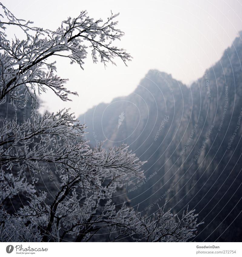 Into the wilderness. Natur Baum Pflanze Winter Ferne Umwelt kalt Berge u. Gebirge Eis Stimmung Wetter Klima groß frei frisch authentisch