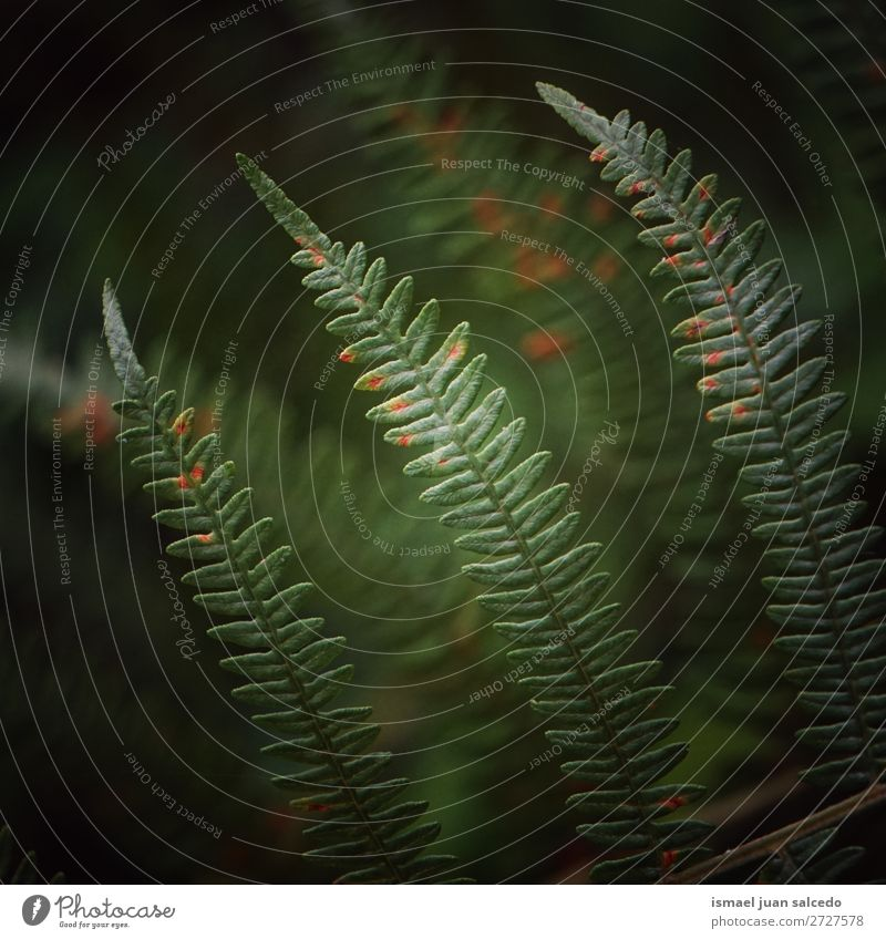 grüner Farn Pflanze Blätter Wurmfarn Blatt abstrakt Konsistenz Garten geblümt Natur Dekoration & Verzierung Außenaufnahme Zerbrechlichkeit Hintergrund Winter