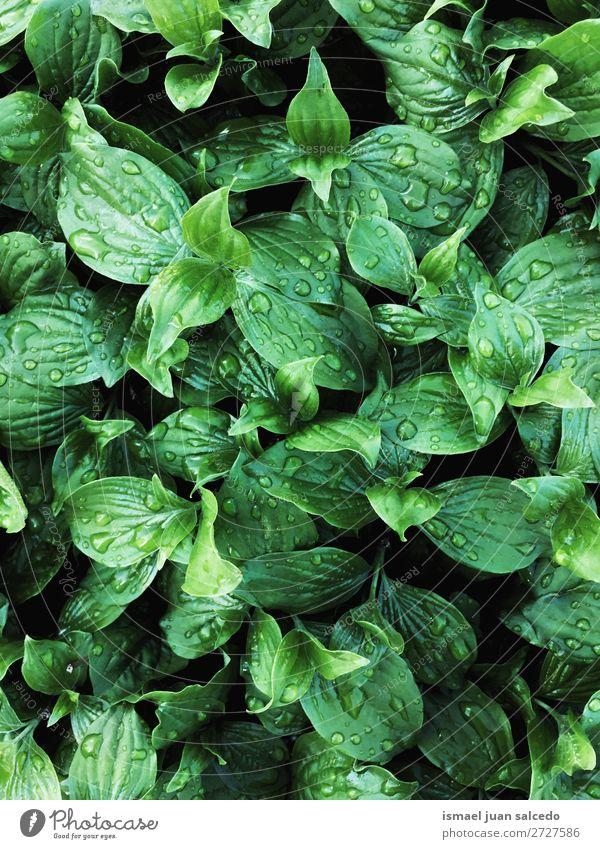 grüne Pflanzenblätter Blatt Garten geblümt Natur Dekoration & Verzierung abstrakt Konsistenz frisch Außenaufnahme Hintergrund Beautyfotografie Zerbrechlichkeit