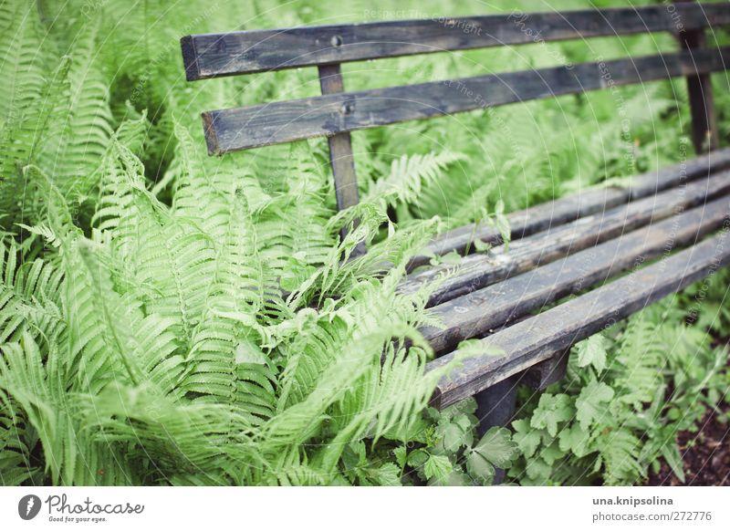 platz im grünen Umwelt Natur Pflanze Farn Grünpflanze Garten Holz alt natürlich grau Vergänglichkeit Wachstum Bank bewachsen Farbfoto Gedeckte Farben