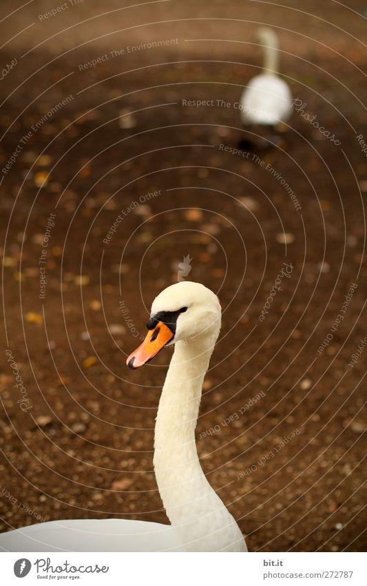 forever.... Natur weiß Tier Umwelt dunkel Herbst Vogel Park braun Zusammensein Erde Tierpaar laufen stehen Symbole & Metaphern Tiergesicht