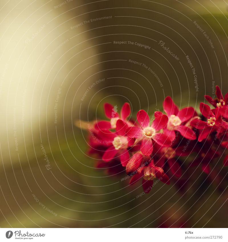 Blümchen für Gismo Umwelt Natur Landschaft Pflanze Frühling Baum Blume Sträucher Garten Duft hell schön klein gelb grün rosa Frühlingsgefühle Farbfoto