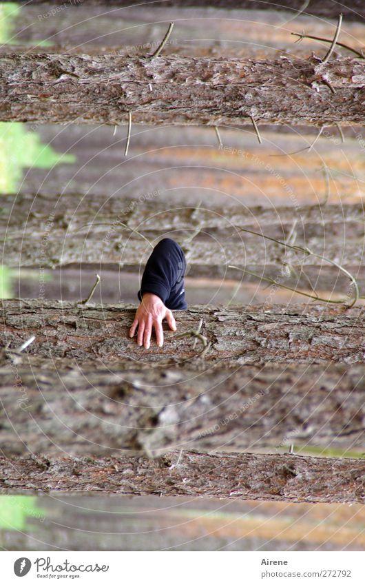Baumstammhalter Mensch Mann Natur blau Hand Baum Erwachsene Wald Landschaft Holz braun Arme außergewöhnlich maskulin verrückt Streifen
