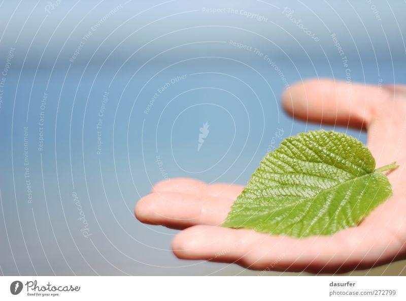 Sommer am See Sonne Hand Finger Umwelt Natur Pflanze Baum Grünpflanze Holz Wasser Schwimmen & Baden blau grün Farbfoto Außenaufnahme Detailaufnahme