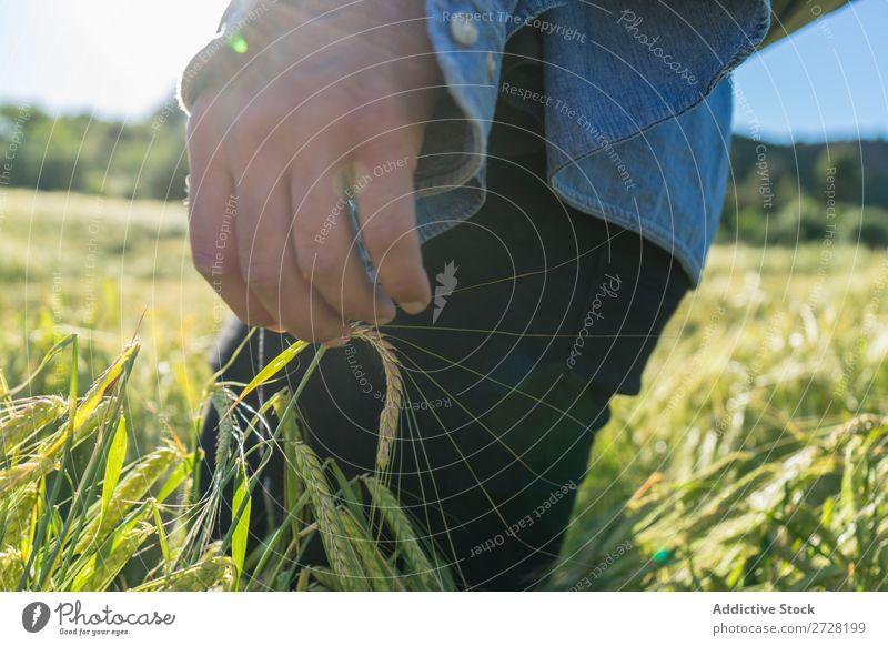Getreideperson beim Wandern im Sommerfeld Mensch Feld berühren Natur Lifestyle Landschaft organisch Hand Körperteil Wiese Außenaufnahme Gras Pflanze Länder