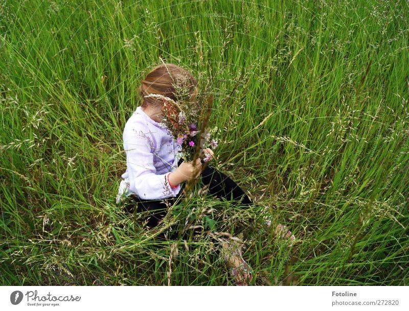 unbeschwerte Kindheit Mensch feminin Mädchen Körper Kopf Haare & Frisuren Arme Hand 1 8-13 Jahre Umwelt Natur Pflanze Sommer Gras Wiese hell natürlich grün