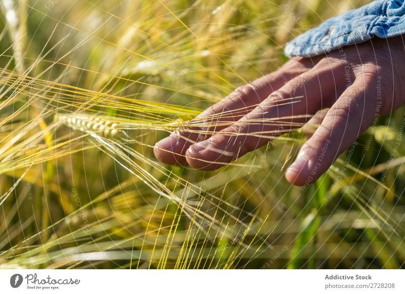 Getreideperson beim Wandern im Sommerfeld Mensch Feld berühren Natur Lifestyle Landschaft organisch