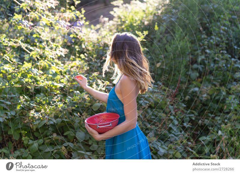 Mädchen beim Beerenpflücken im Garten Frau Ernte süß Landwirtschaft Gärtner Natur
