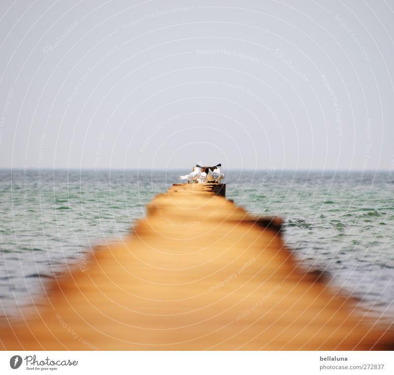 Hiddensee | Dieser Weg II Umwelt Natur Wasser Himmel Wolkenloser Himmel Horizont Frühling Sommer Schönes Wetter Wellen Küste Strand Ostsee Meer Insel Tier