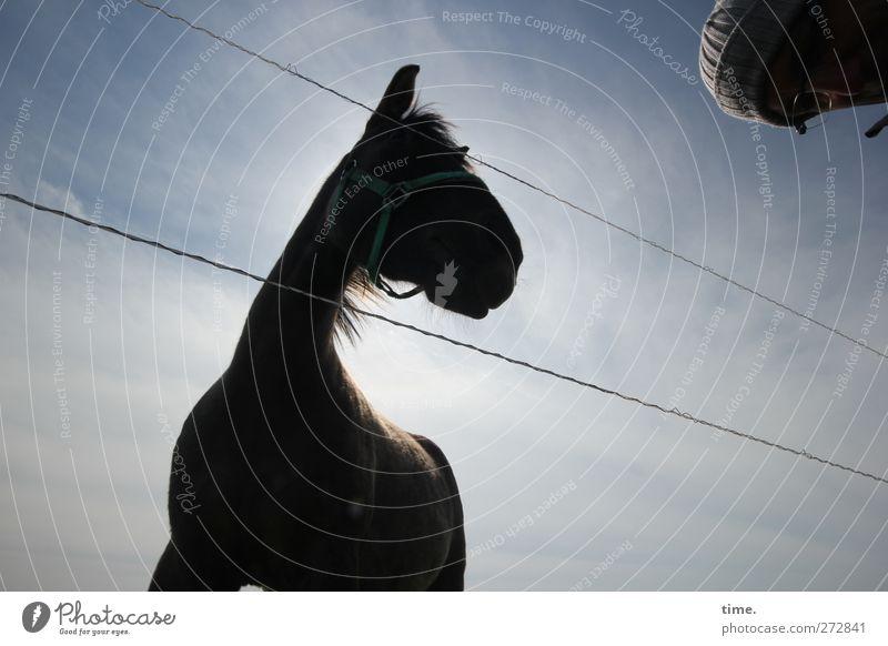 Hiddensee | Pferdeflüsterer Mensch Himmel Tier Wolken Kopf Stimmung Abenteuer beobachten Kommunizieren Pferd Neugier Vertrauen Stahlkabel Mütze Wachsamkeit Partnerschaft