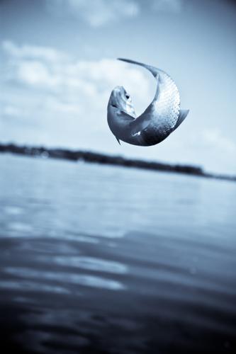 Hakenschlag in blau Himmel Natur Wasser Erholung Tier Freiheit See Horizont Erfolg Fisch fangen Angeln silber gefangen