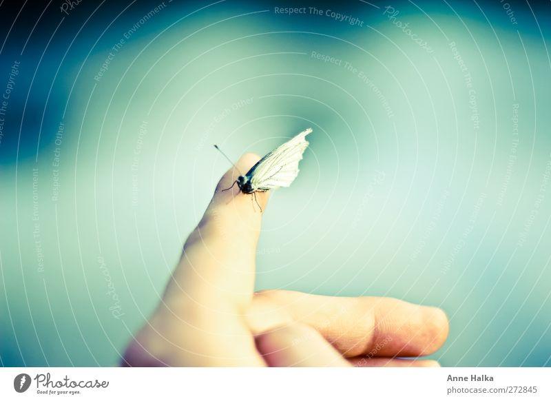 Pieris brassicae Hand ruhig Erholung Ferne Freiheit fliegen sitzen Energie frei Finger berühren Sehnsucht Schmetterling Futurismus Meditation sanft