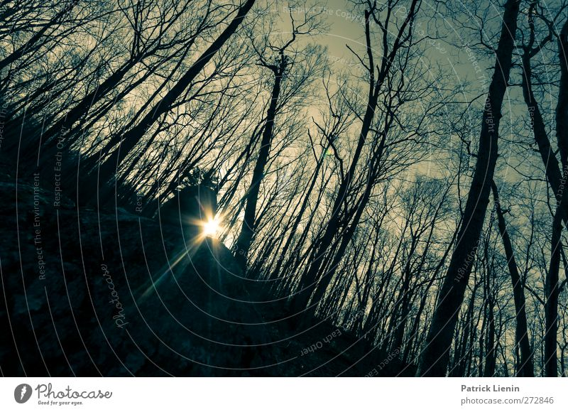 Night and Day Natur Baum Einsamkeit Wald Umwelt Landschaft Freiheit Luft Stimmung Wetter Kraft Beginn ästhetisch Urelemente einzigartig Vergänglichkeit
