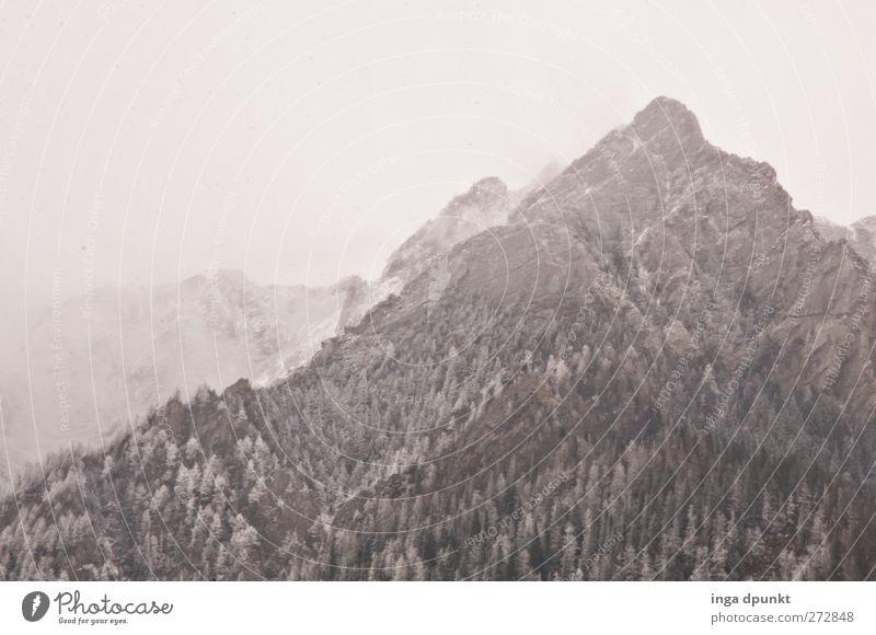 Höhenstufen Natur Baum Pflanze Winter Umwelt Landschaft kalt Schnee Berge u. Gebirge Eis Kraft außergewöhnlich Nebel hoch authentisch Abenteuer