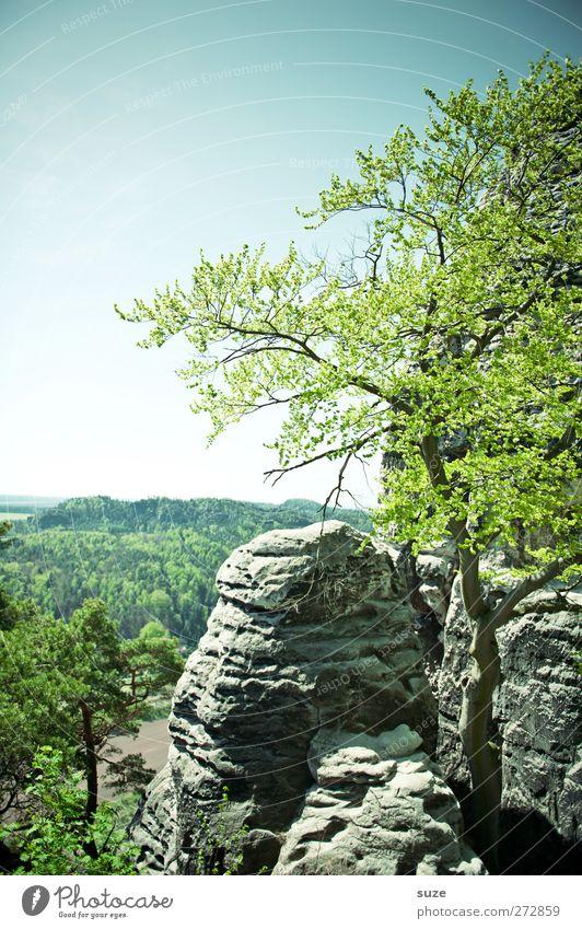 Schere-Stein-Papier Himmel Natur grün Baum Pflanze Umwelt Landschaft Berge u. Gebirge Frühling Freiheit Felsen Klima wild groß hoch authentisch