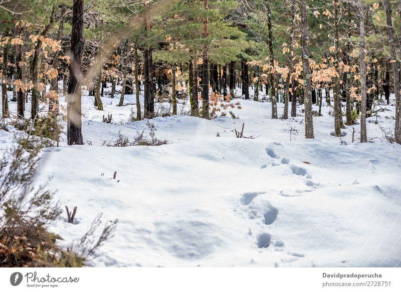wunderschöne Aussicht auf den Landschaftshintergrund einer winterlichen Schneebergszene Bahn Berge u. Gebirge Natur weiß bedeckt Hintergrundbild