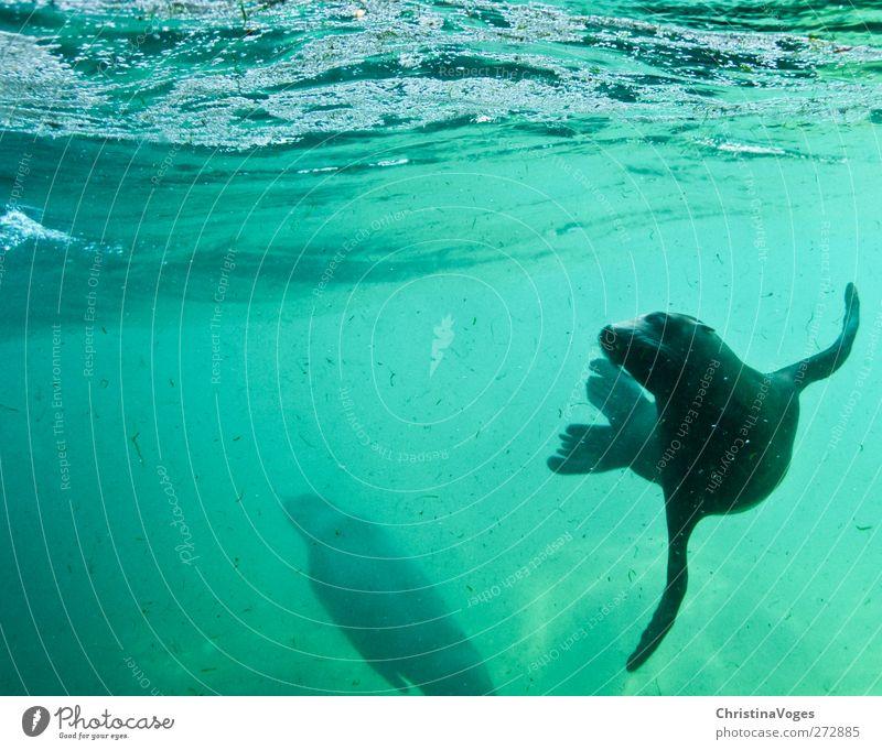unter dem meer Natur Wasser grün Meer Freude Tier schwarz Umwelt Glück Schwimmen & Baden Wellen Zufriedenheit frisch Fröhlichkeit Perspektive niedlich