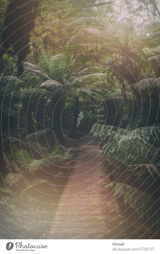 magischer wald von riesenfarnen, australien Leben Natur Landschaft Pflanze Baum Farn Park Wald Urwald nass niedlich grün Abenteuer Einsamkeit Erholung Farbe