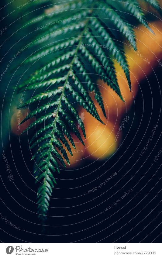 Farn im Dunkeln Leben Natur Pflanze Wald Urwald dunkel nass niedlich grün Farbe Wurmfarn Blütenknospen Farnknospe Australien + Ozeanien Melbourne Victoria live
