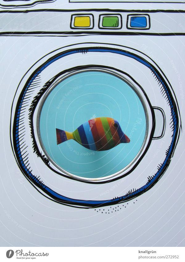 Süßwasserfisch blau Wasser weiß schön Freude Tier Farbe Gefühle Schwimmen & Baden außergewöhnlich Fisch einzigartig Kreativität Idee skurril exotisch