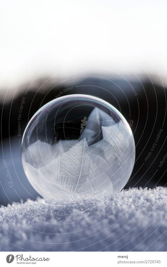 O mit Frostkunst Winter Eis Schnee Seifenblase Kristallstrukturen Kristalle Kugel dunkel dünn authentisch elegant einzigartig kalt natürlich rund Reinheit