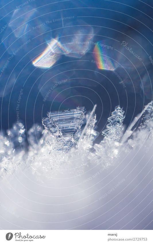 Kristallzauber Leben harmonisch Natur Winter Eis Frost Schnee Kristalle glänzend außergewöhnlich kalt natürlich blau Reinheit ästhetisch einzigartig rein