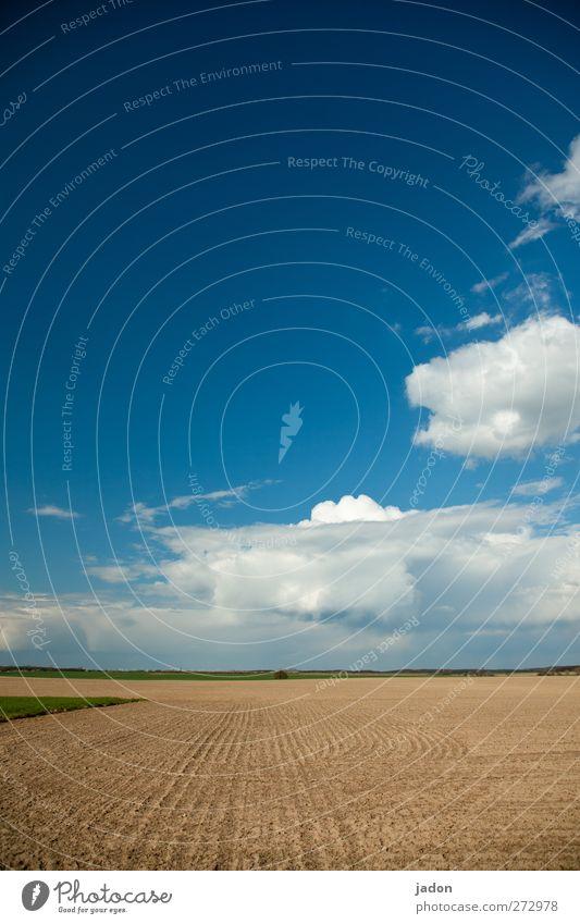 ländlicher raum. Landschaft Erde Sand Himmel Wolken Schönes Wetter Feld Unendlichkeit blau ruhig Einsamkeit Horizont Natur Perspektive Ferne Ebene Spuren flach