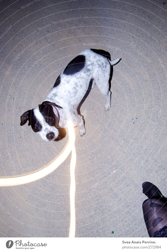 lina <3 feminin Junge Frau Jugendliche Beine Fuß 1 Mensch Kieselsteine Asphalt Mode Rock Strumpfhose Leggings Spitze Schuhe Ballerina Tier Hund gehen trashig