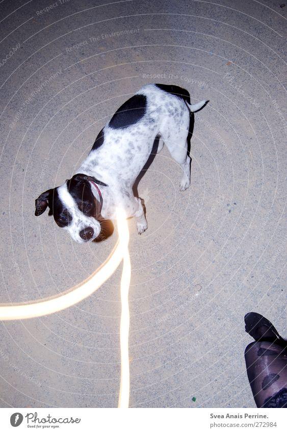 lina <3 Hund Mensch Jugendliche Tier feminin Beine Mode Junge Frau Fuß gehen Schuhe Asphalt Rock trashig Strumpfhose Spitze