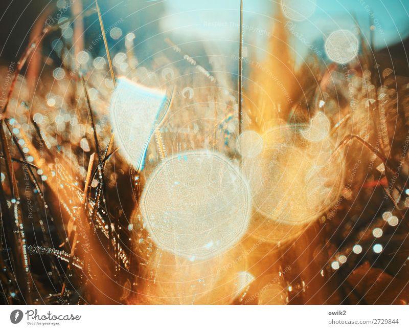 Flimmerkasten Umwelt Natur Pflanze Wassertropfen Herbst Klima Schönes Wetter Gras Sträucher Wildpflanze Halm Stengel Wiese glänzend leuchten Freundlichkeit hell