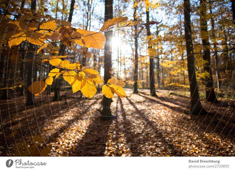 Herbstlicht Umwelt Natur Landschaft Pflanze Tier Wolkenloser Himmel Schönes Wetter Baum Moos Blatt Wald braun gelb orange schwarz Erholung erleben ruhig