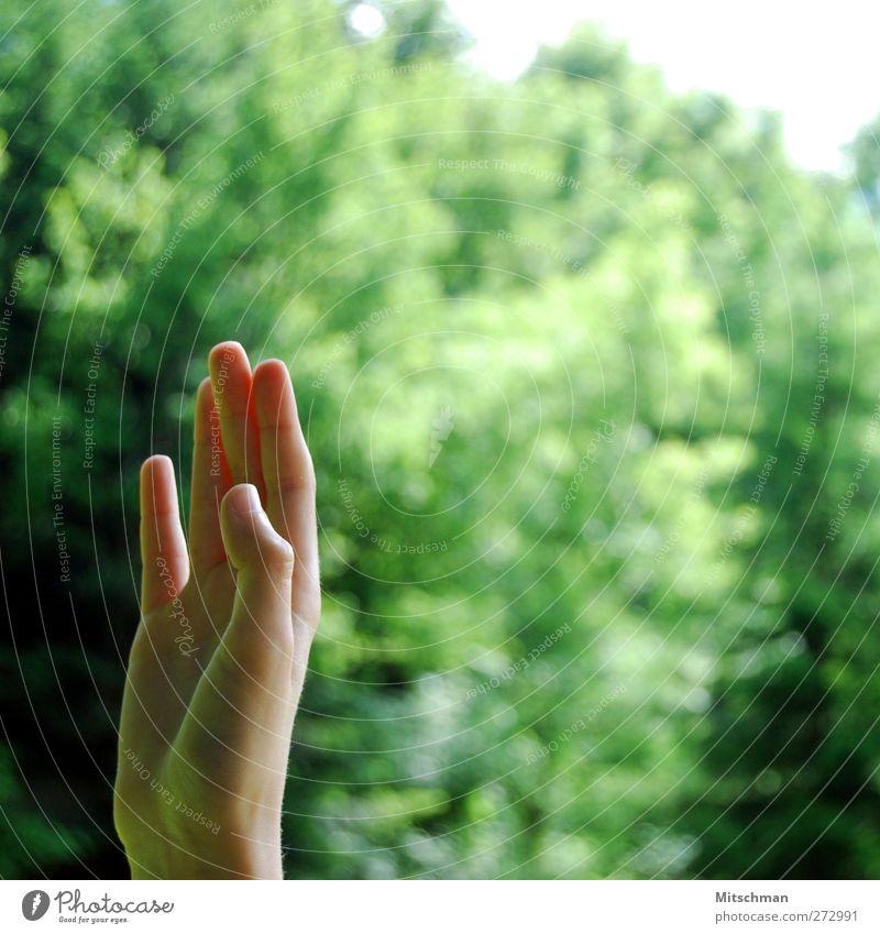 Meldung Mensch Hand grün Finger Kommunizieren gestikulieren winken
