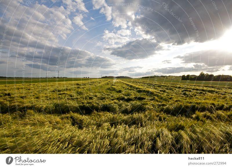 Gedrücktes Getreide Himmel Natur blau Pflanze grün Sommer Sonne Landschaft ruhig Wolken Ferne natürlich Gesundheit Freiheit Lebensmittel Wetter