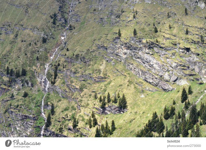 Blick vom San Bernhardino Pass Ferien & Urlaub & Reisen grün Baum Erholung Einsamkeit Landschaft Ferne Berge u. Gebirge Frühling Hintergrundbild grau braun
