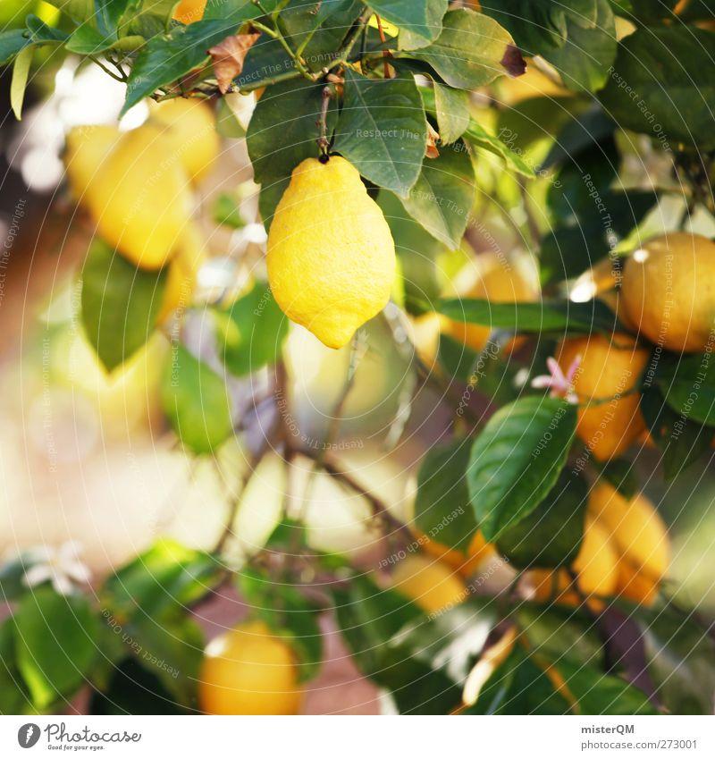 Orange Garden V Umwelt Natur Landschaft Pflanze ästhetisch sauer Zitrone Zitronensaft zitronengelb Zitronenbaum Zitronenblatt Wachstum Frucht Vitamin C