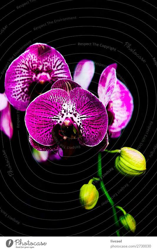 exquisite Orchidee auf schwarzem Hintergrund schön Garten Natur Pflanze Blume Blüte Park dunkel gelb grün rosa purpur fantastisch Beautyfotografie