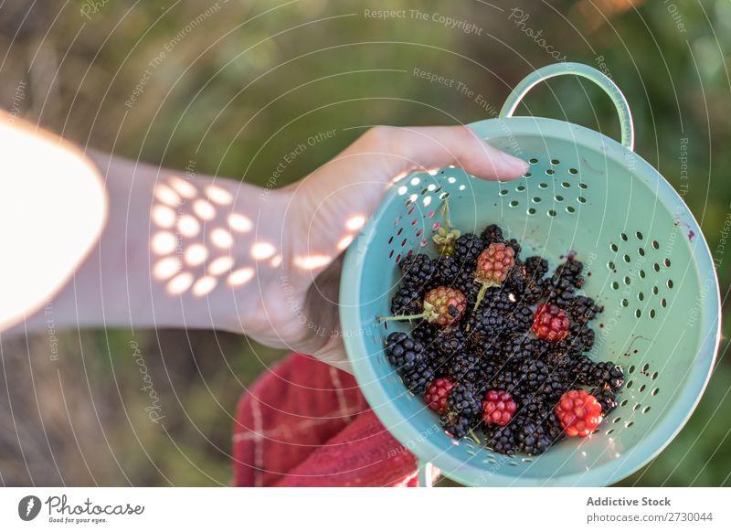 Sieb mit Brombeeren Frau Garten Pflanze Natur Sommer organisch Gesundheit