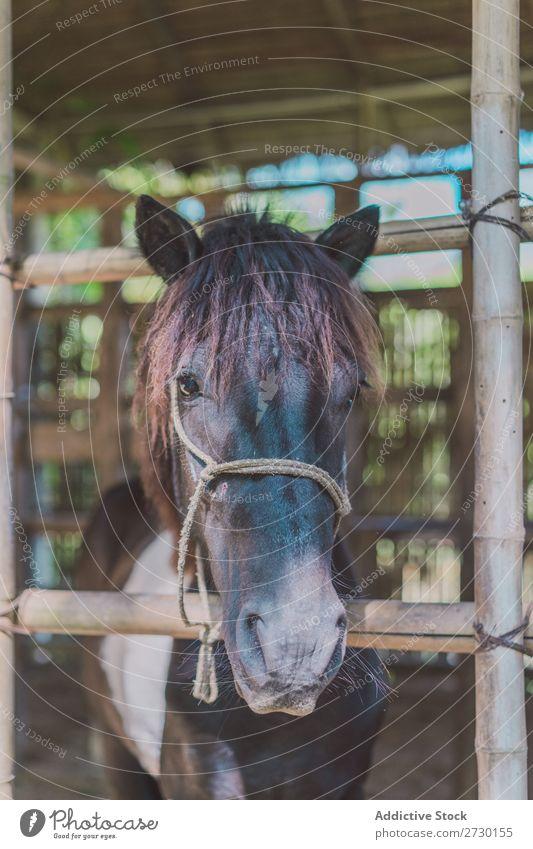 Kleines Fohlen im Paddock Pferd Essen Sattelkammer klein Kind Weide Natur Sommer schön Bauernhof grün Tier Beautyfotografie Landschaft ländlich Hengst