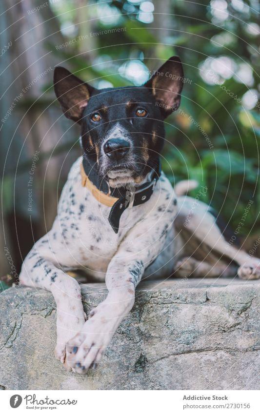 Süßer Mischlingshund draußen Hund besinnlich Außenaufnahme lügen Fürsorge Tier Haustier heimisch niedlich Porträt Hündchen Jugendliche klein Freundlichkeit