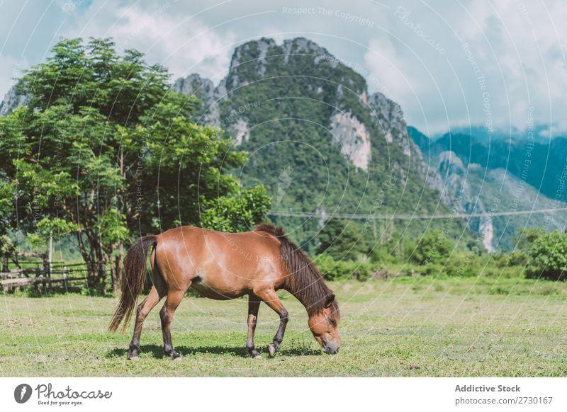 Pferdeweide auf der Wiese Weide Natur Sommer Gras schön Bauernhof Feld grün Tier Beautyfotografie Landschaft ländlich Hengst pferdeähnlich braun Reiterin frei