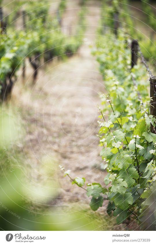 Am Berg. Natur grün Pflanze Umwelt Landschaft Berge u. Gebirge ästhetisch Wein Reihe Sachsen Berghang Weintrauben Weinlese Weinberg züchten aufgereiht