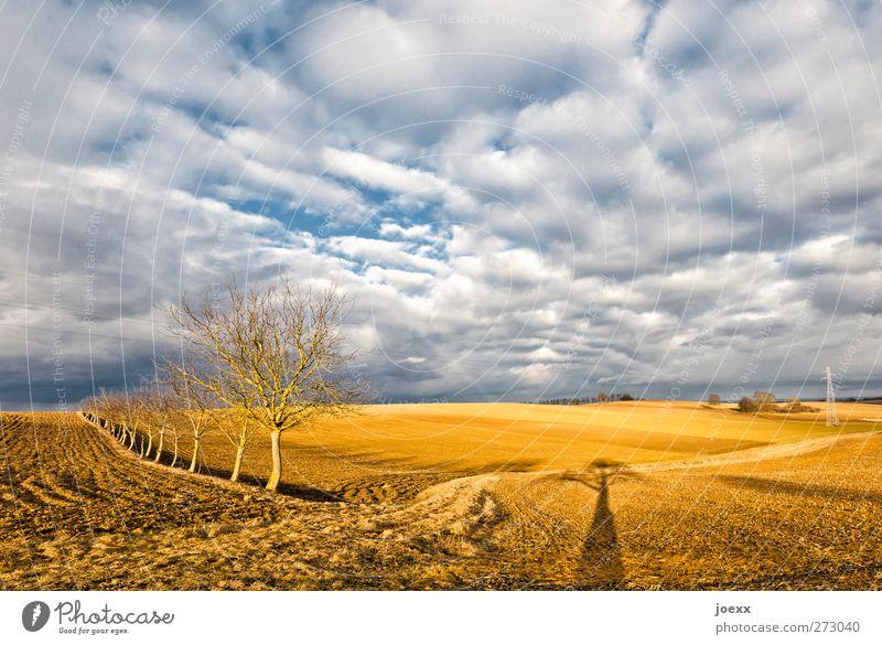 Kopf frei Himmel Wolken Horizont Herbst Wetter Schönes Wetter Baum Feld frisch hell blau braun weiß ruhig Idylle Klima Umwelt Ferne Farbfoto mehrfarbig