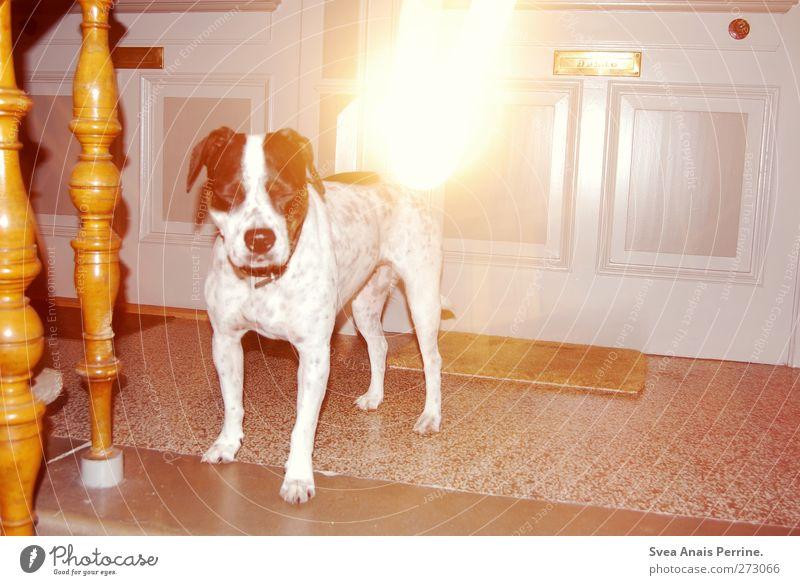 I <3 Lina Haustier Eingangstür Treppe Treppengeländer Fußmatte Briefkasten Steinboden Tier Hund Tiergesicht 1 außergewöhnlich trashig Boxer gepunktet Farbfoto