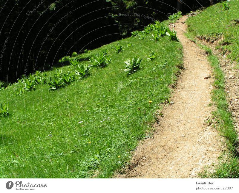 Weideweg Wiese Gras Berge u. Gebirge Wege & Pfade