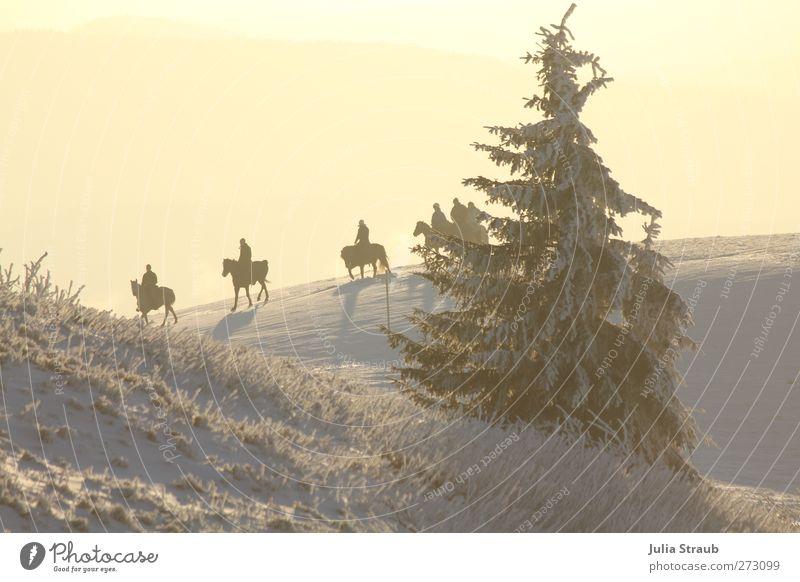 Ausritt Mensch 5 Landschaft Sonnenlicht Winter Schnee Baum Berge u. Gebirge Nutztier Pferd 4 Tier Tiergruppe Erholung Menschengruppe Tanne Farbfoto