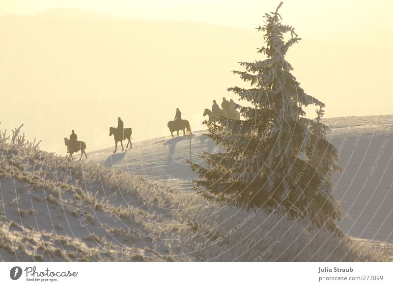 Ausritt Mensch Baum Tier Winter Erholung Landschaft Berge u. Gebirge Schnee Menschengruppe Tiergruppe Pferd Tanne Nutztier Ausritt
