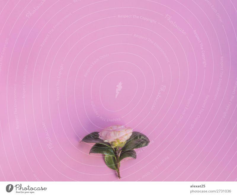 Natur Pflanze grün weiß Blume Blatt Liebe natürlich Feste & Feiern rosa Dekoration & Verzierung Aussicht Geburtstag Fotografie Hochzeit Postkarte